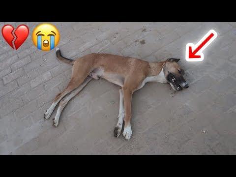 اغرب حالة أنقاذ كلب مسعور بعد ما كان بيقطعون راسه !!