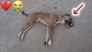 The Weirdest Recuse Mission Ever!! A Rabid Dog That Almost Got Put Down!