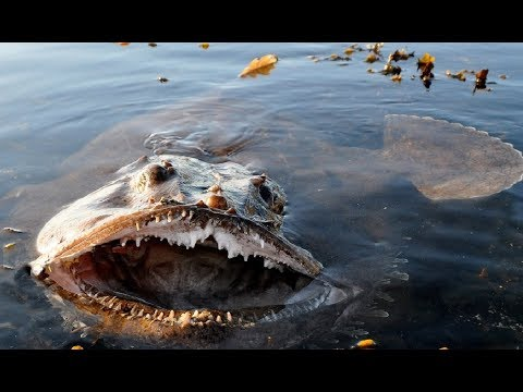 морской дьявол рыбалка