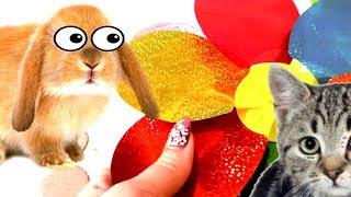 Кролика Баффи И котенок Макс Сборник серий домашние животные делают подарки