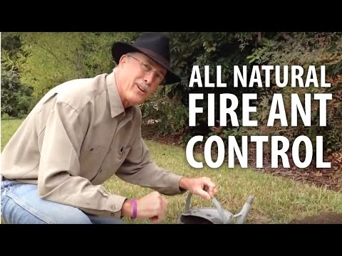 All Natural Fire Ant Control The Dirt Doctor Youtube
