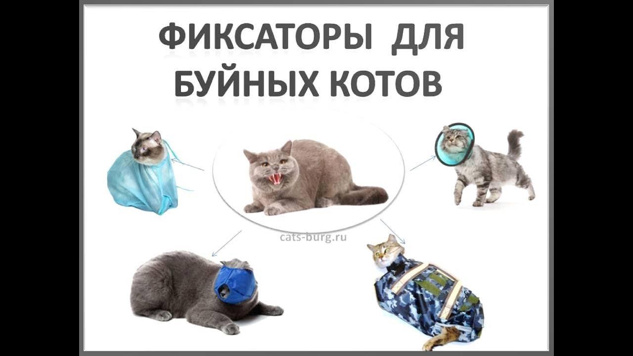 Как сшить намордник для кошек