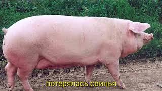 Skyrim главная тема, правильный перевод на русский
