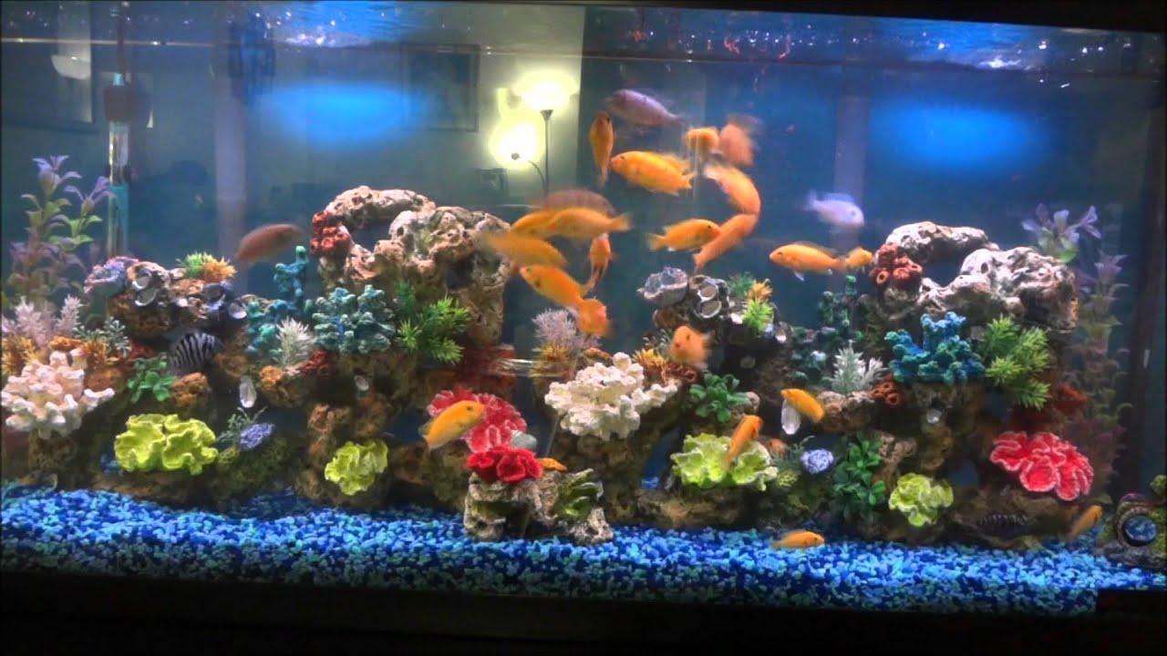 Aquarium fish tank in south africa - Aquarium Fish Tank In South Africa
