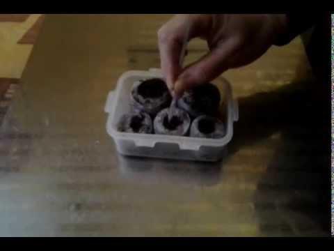 Как пользоваться торфяной таблеткой для рассады видео