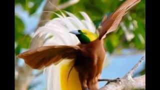 Michael E - Bird of Paradise