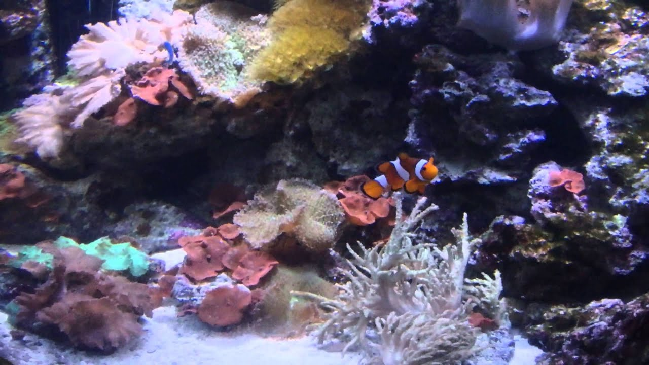 Fish in nemo aquarium - The Real Nemo And Dori At The Texas State Aquarium