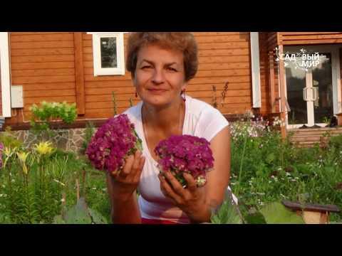 видео: Почему не завязалась цветная капуста