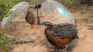 Awesome Quick Bird Trap Using Three Old Fans How To Make Bird Trap With Electric Fan Guard