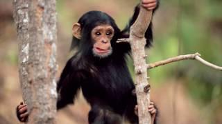 Азбука для самых маленьких, читаем буквы и слова, учим животных ч.1