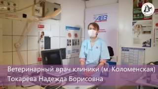 """УЗИ животным - рассказывает ветеринарный врач """"Айболит Плюс"""""""