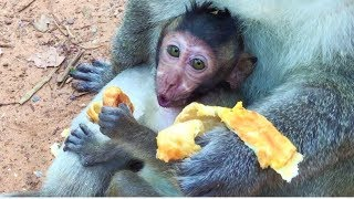 Oh!! my god baby cry again and again I think this baby monkey is a king crying Angkor Daily  713