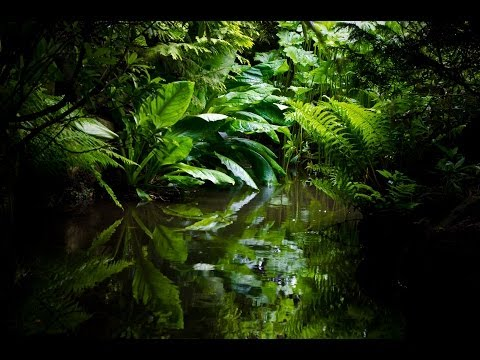 Get To Sleep Fast - Best Amazon Rainforest Relaxation. Jungl