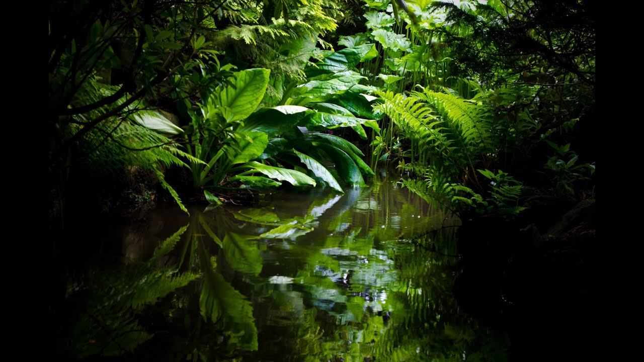 A look at the amazonian rainforest and its waters
