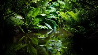 Get To Sleep Fast - Best Amazon Rainforest Relaxation. Jungle Chillout Concentrate (Part 2)