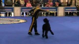 Евразия 2009 Прогресс 1 место. Фристайл (танцы с собаками)