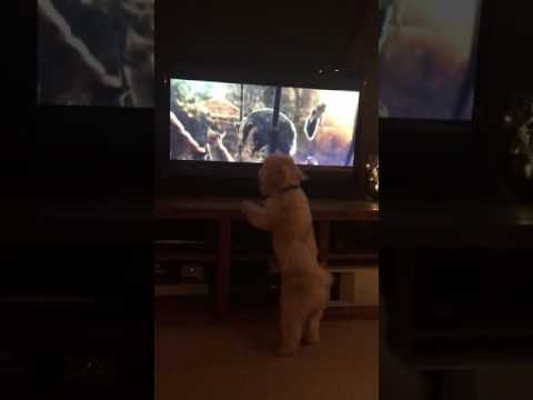 Viral Video UK: Dog reacts to John Lewis Christmas advert #BusterTheBoxer