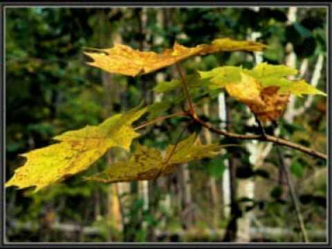 В последнюю осень