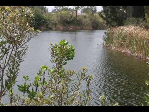 NW Cape Coral Waterfront Lot