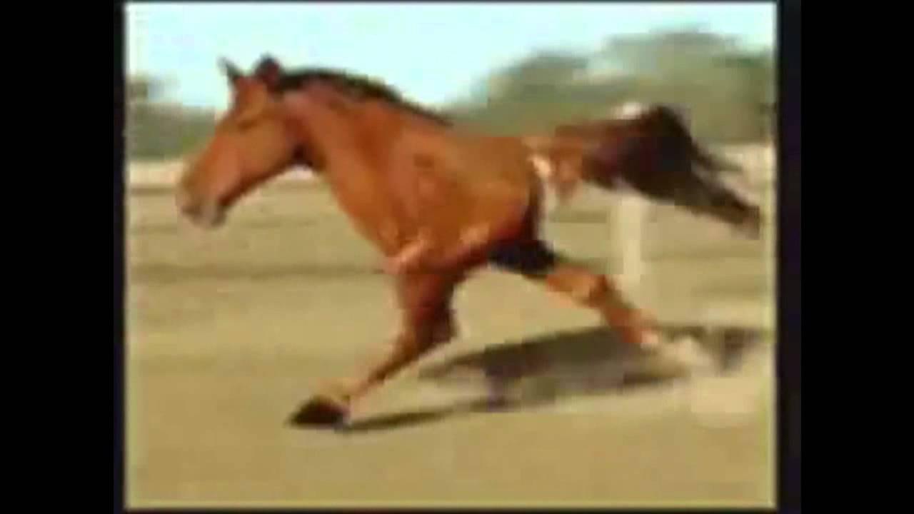 Retarded Running Horse...