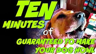 Ten Minutes Of Guaranteed To Make Your Dog Howl