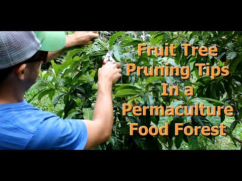 """Fruit Tree Pruning Tips for a Permaculture Food Forest """"Living Permaculture"""" Episode 5"""