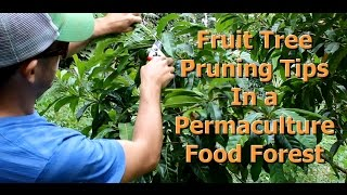 Fruit Tree Pruning Tips for a Permaculture Food Forest