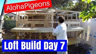 Homing Racing Pigeon Loft Construction Day 7
