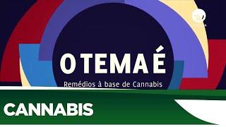 Destaques - Janeiro 2020 - Uso medicinal da Cannabis divide opiniões - 17/01/2020