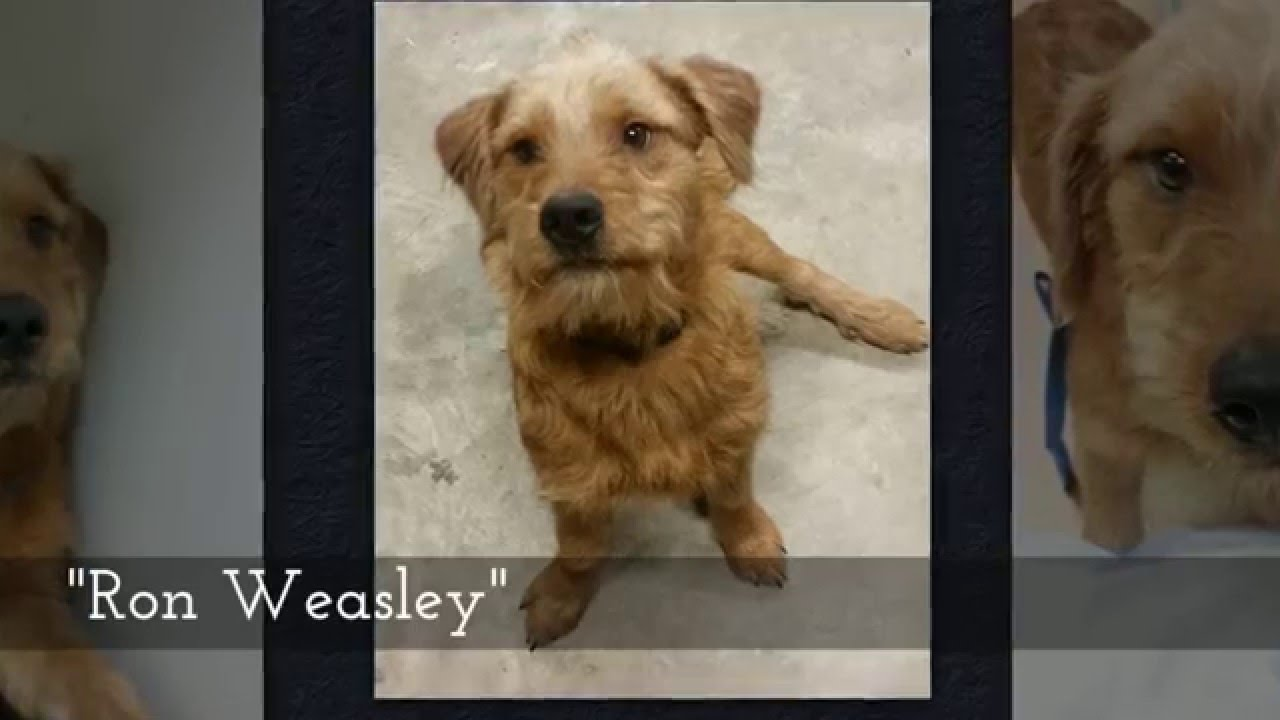 Adopt a Pet - Chesapeake Humane Society