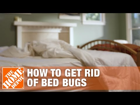 How to get rid of bed bugs apartment