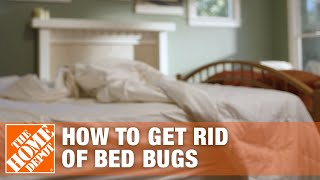 How to Get Rid of Bed Bugs | DIY Pest Control