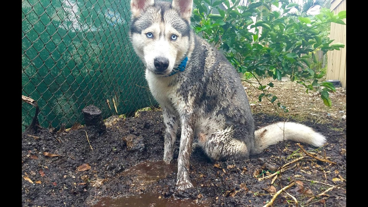 What To Do Before Showering Your Dog!