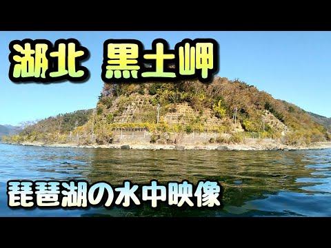 #琵琶湖 #水中映像  琵琶湖の湖北 黒土岬の水中動画