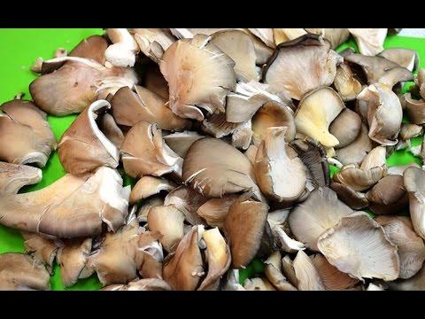 Как вкусно замариновать гриб - вешенку.