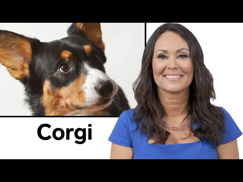 Every Dog Breed Explained (Part 1) | WIRED