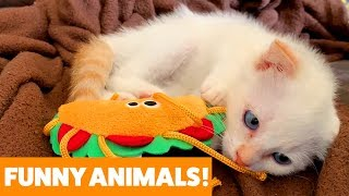 Download Funniest Pets & Animals of the Week | Funny Pet Videos Mp3 and Videos