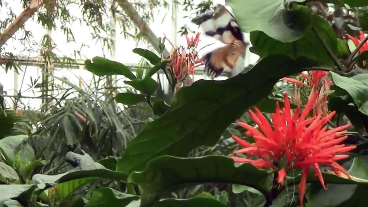 Meijer Gardens Butterfly Exhibit 2013