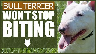 How To Stop A BULL TERRIER BITING
