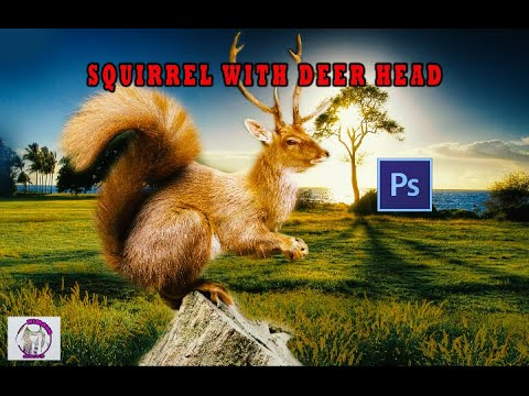 There Was An Epic Photoshop Battle With This Picture Of A ... |Hilarious Animal Edits