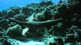 Sea Rex 3D: Journey to a Prehistoric World Featurette