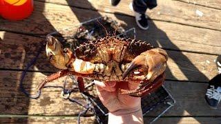 Half Moon Bay Pier Crabbing 2015