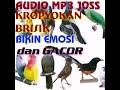 Terapi Pancingan Semua Jenis Burung Agar Emosi Dan Gacor Hanya Burung Sakit Yang Diam  Mp3 - Mp4 Download