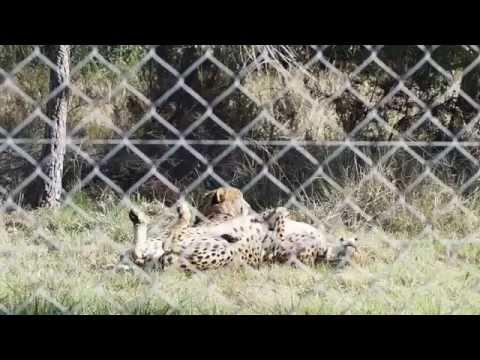 Jukani Wildlife Sanctuary