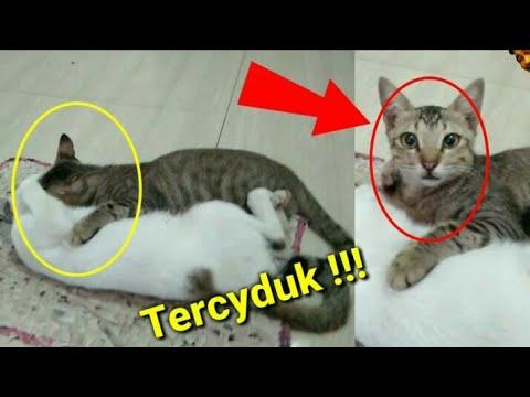 Bermesraan Tanpa Status Sah, Duo Cats Jaman Old Tercyduk !! 😾