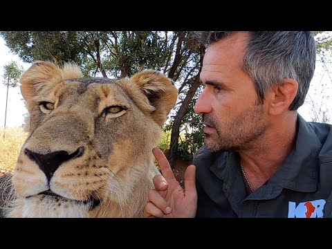 Lion Diseases With #AskMeg - Part 1 | The Lion Whisperer