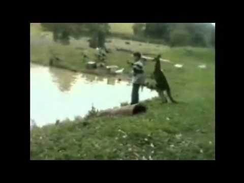 Kangaroo kicks man into water