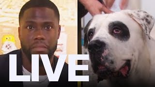 Kevin Hart Freaked Out By Dog | ET Canada LIVE