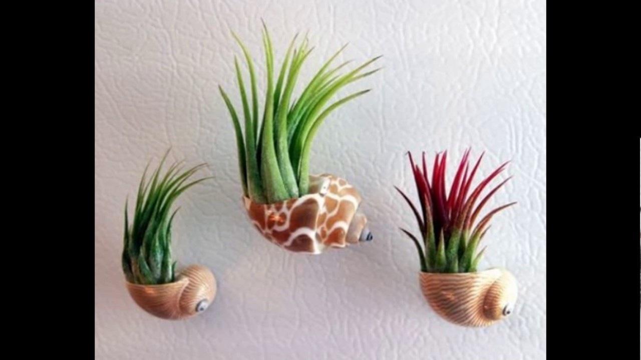 Coolest Ways To Display Air Plants Youtube