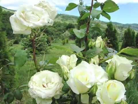 Вальс цветов в Светоче Школа Валерия Синельникова Светоч